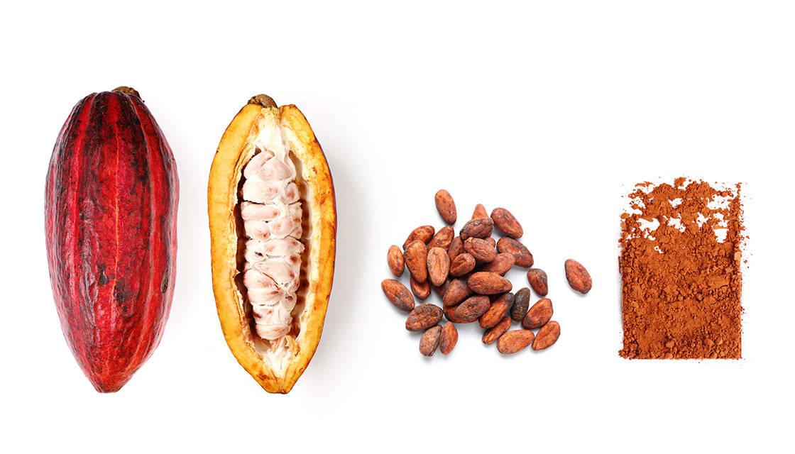 Cacao Fruit & Cacao Powder