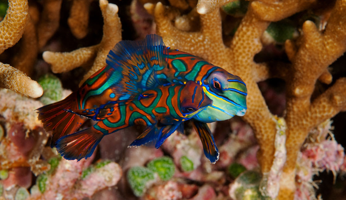 The planet's most biodiverse marine environment with the richest coral reef ecosystems