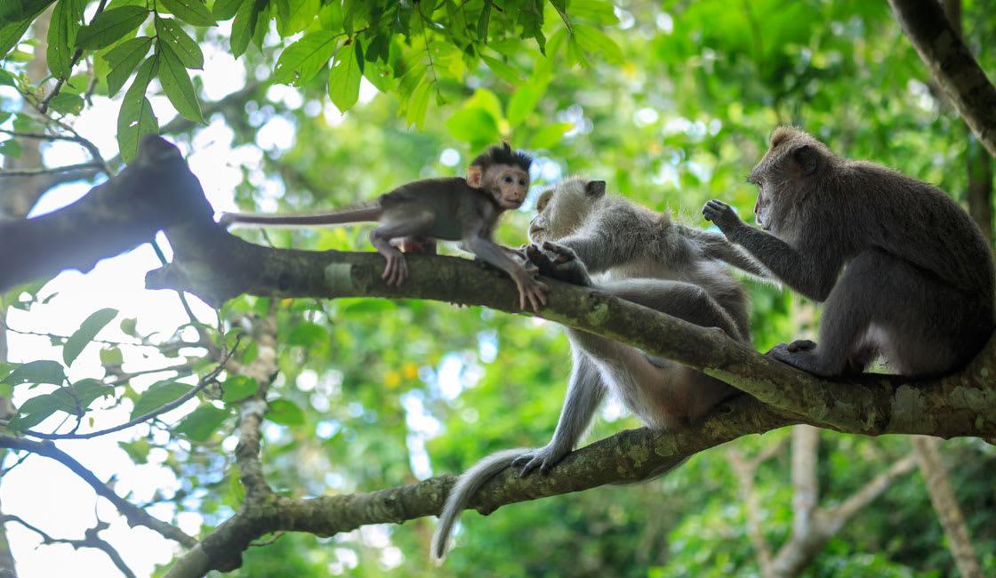 monkeys on branches