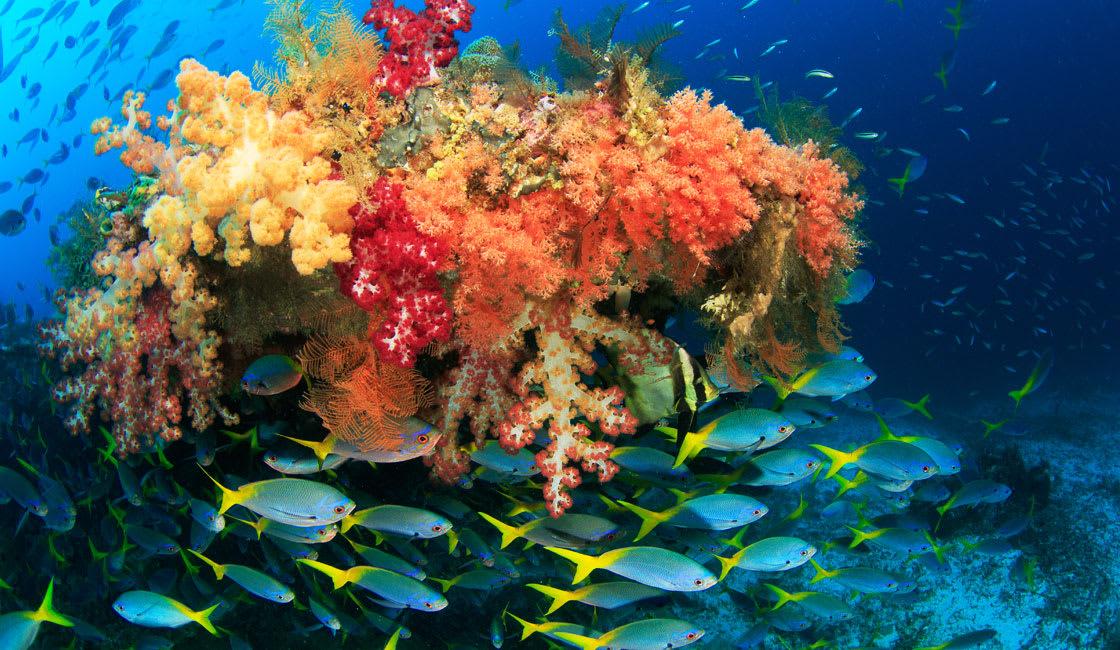 orange coral and fish