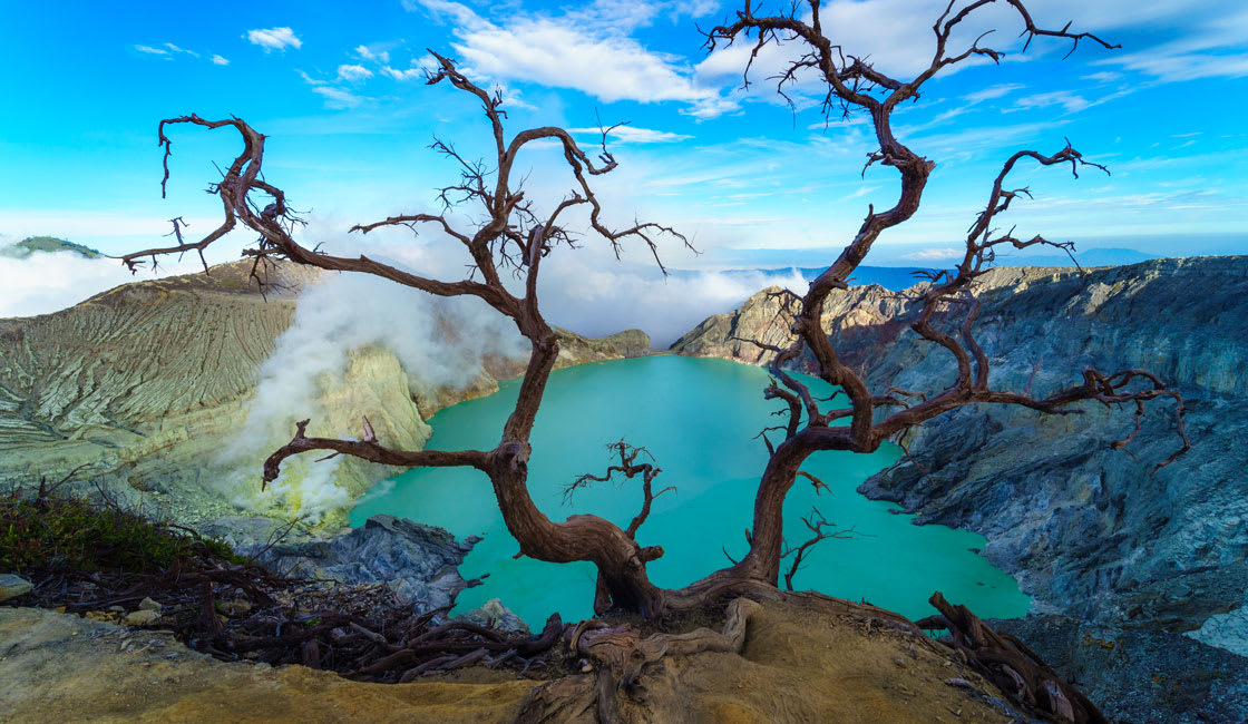 dry branches and a lake