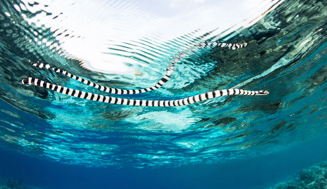 black and white eel in the sea