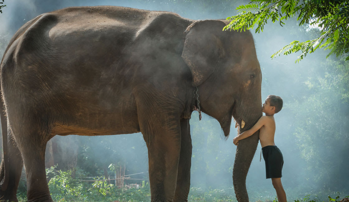 bond with elephants