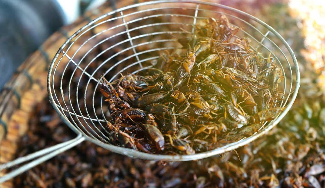 Deep fried crickets