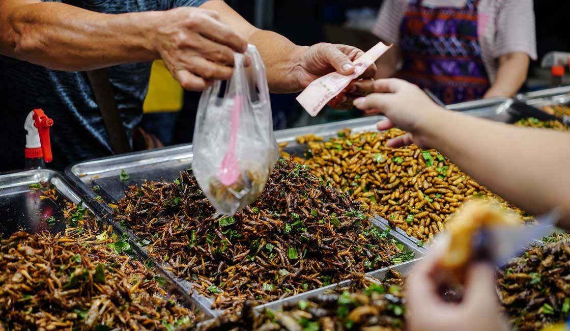 Bag of bugs sold in the market