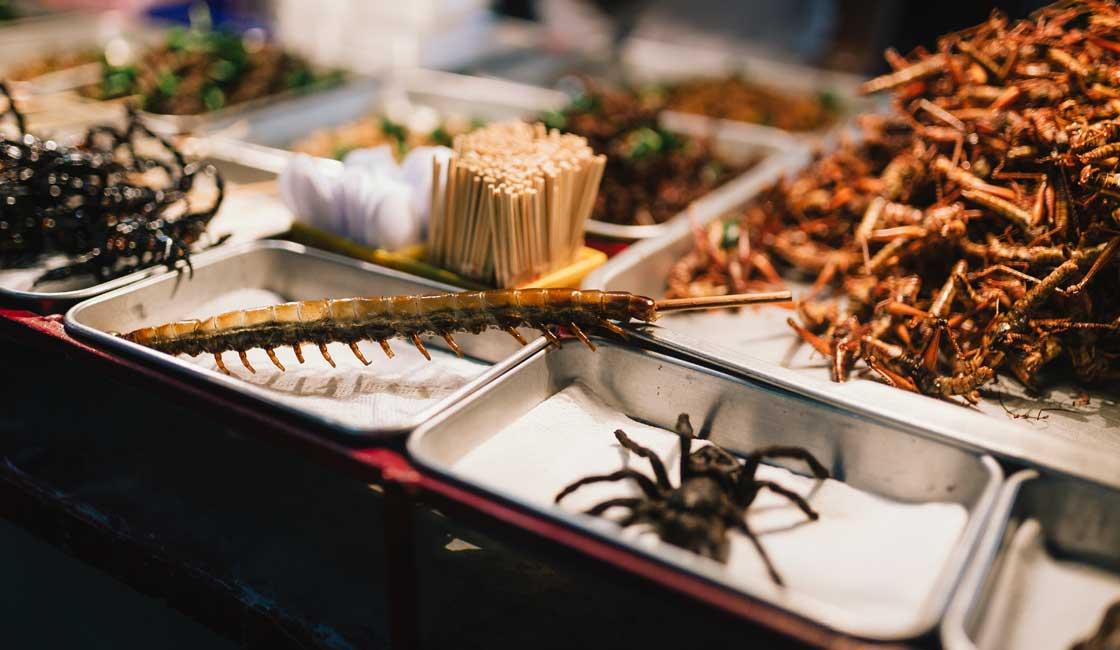 Tarantula on a market display