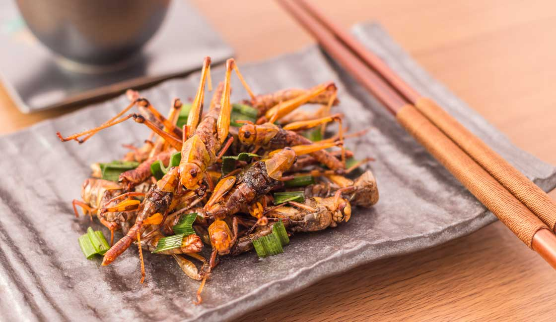 Grasshoppers served on a plate