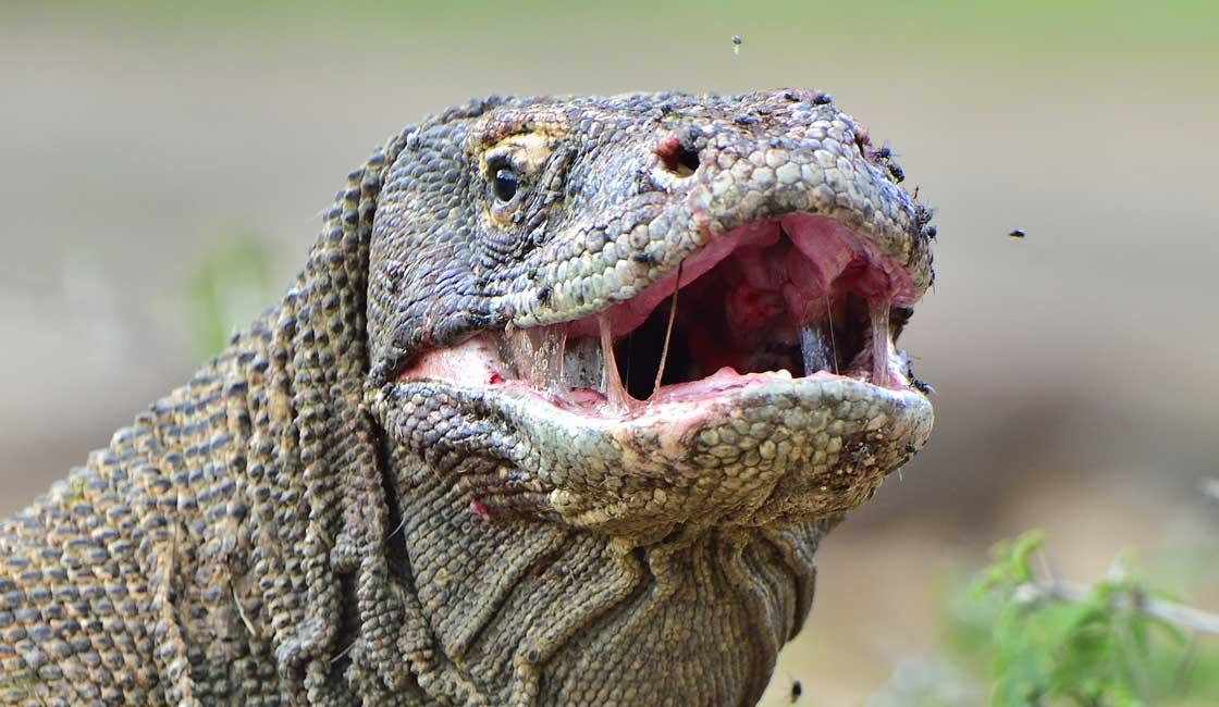 Closeup of a large lizard