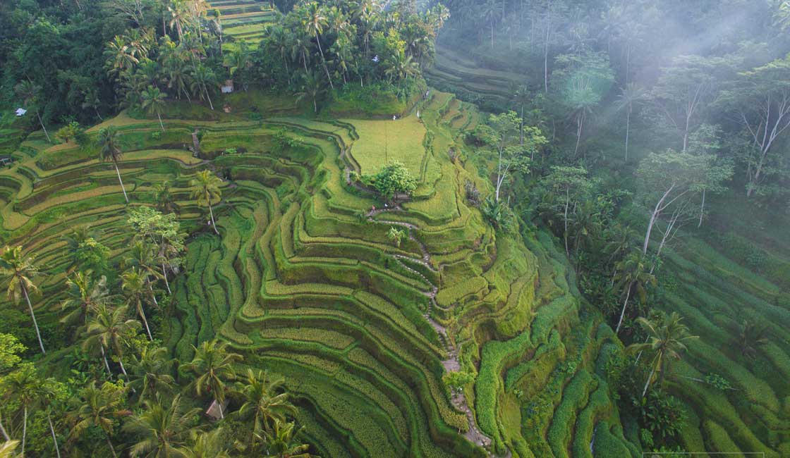 Hill covered with rice terraces