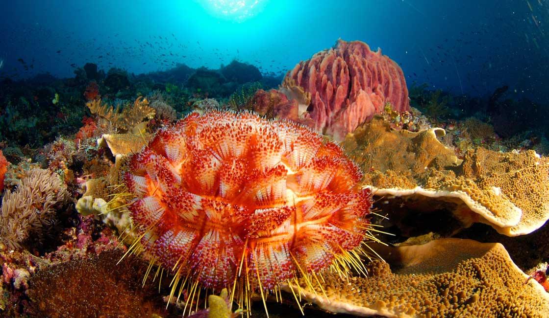 Coral reef in Komodo