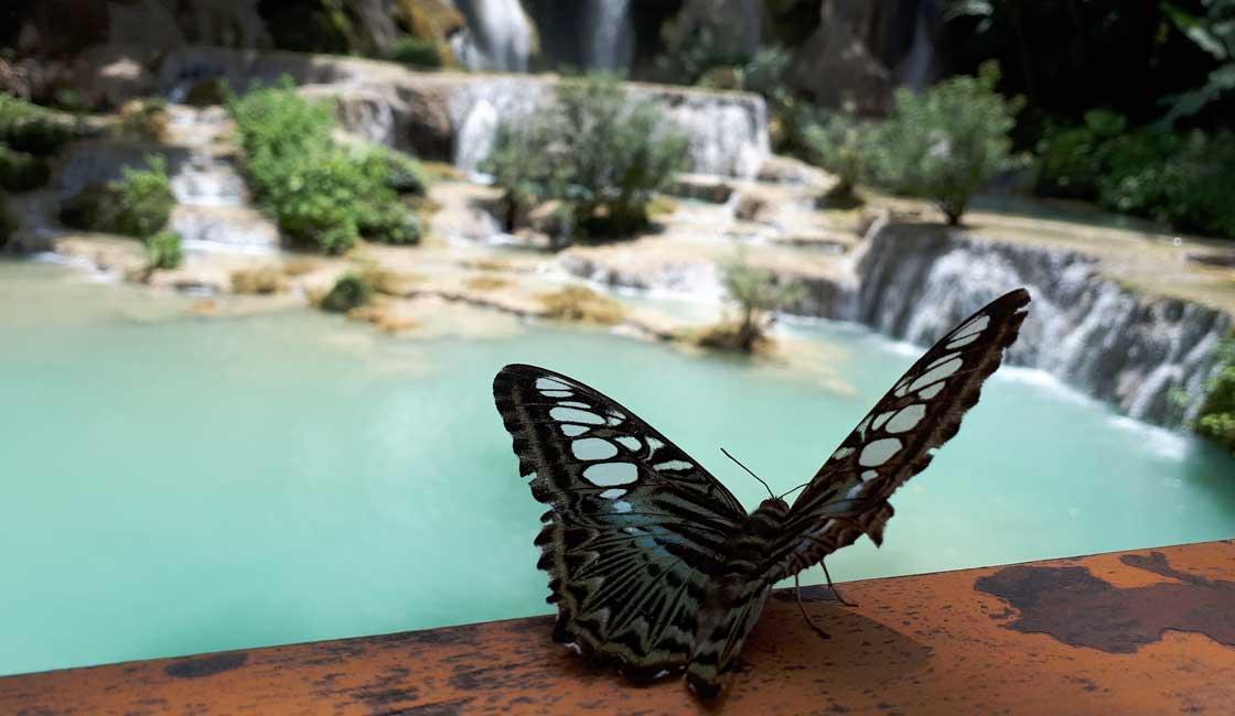 Butterfly near the waterfall