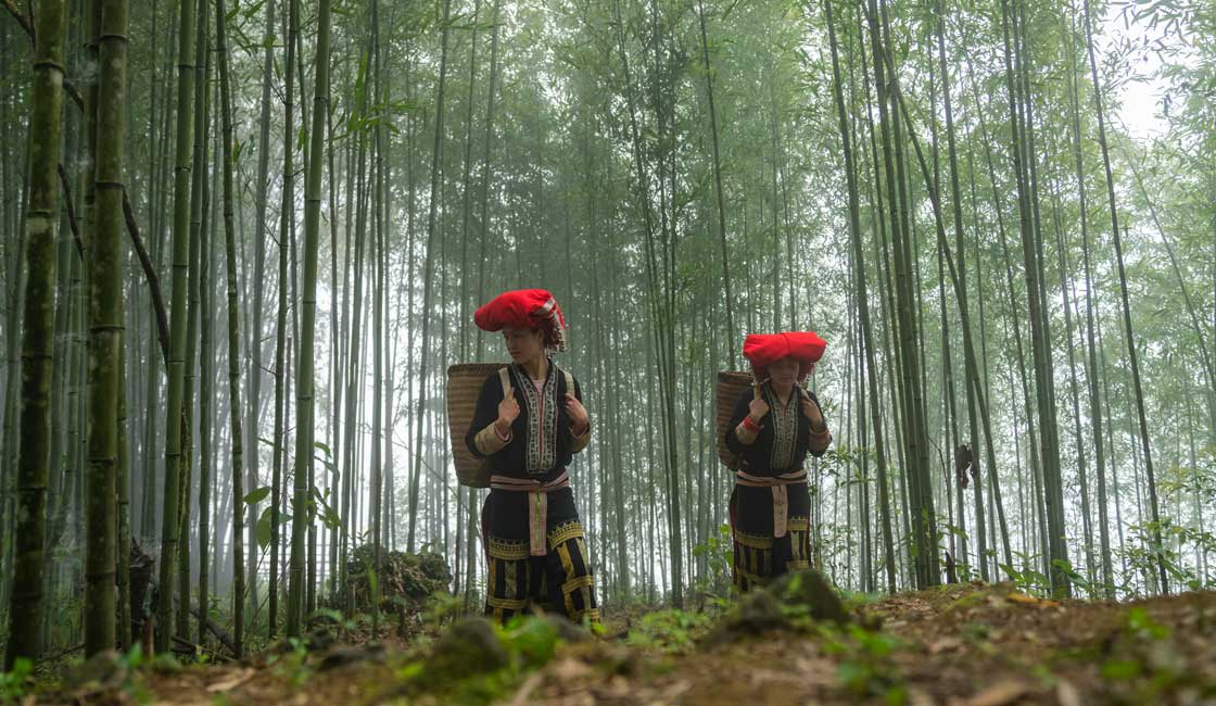 Two Dao women walking through the forest