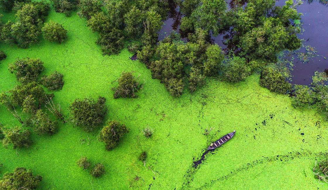 Wetlands seen from above
