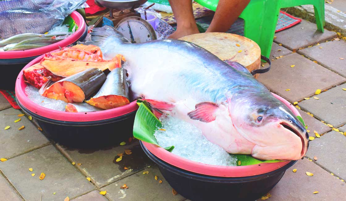 A large catfish sold on the market