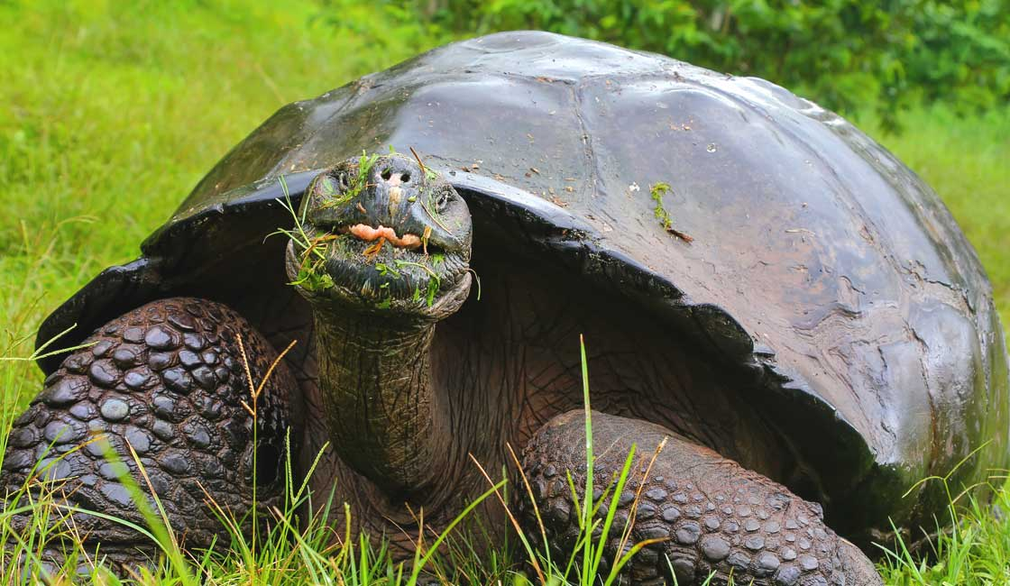 Tortoise with funny face