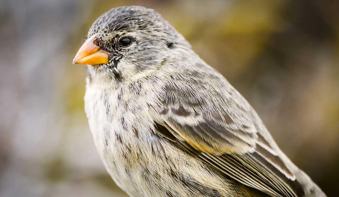 Small bird with orange beak