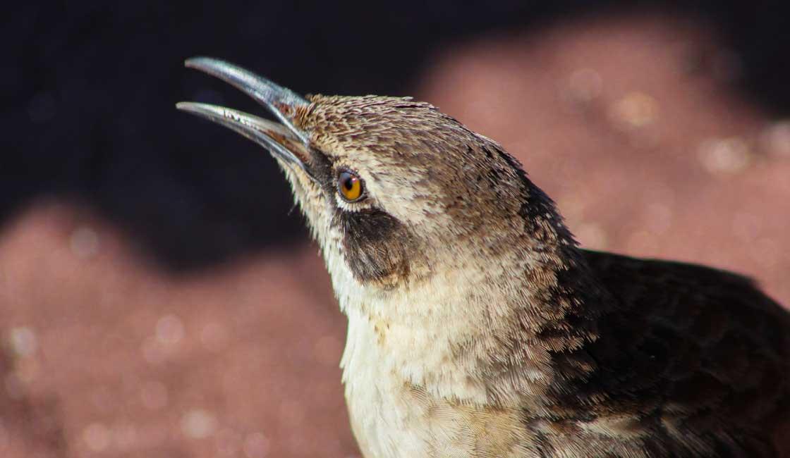 Closeup of a small bird