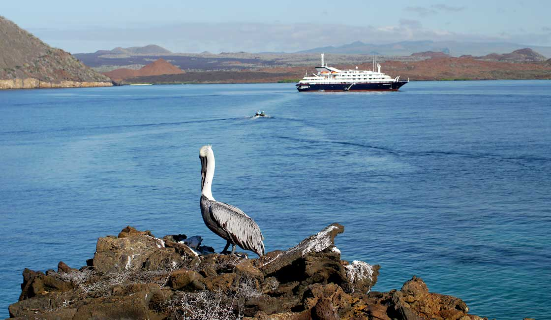 A cruise boat in a distance and a pelican