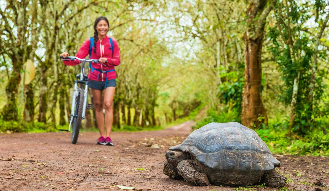 A girl meeting a tortoise while cycling