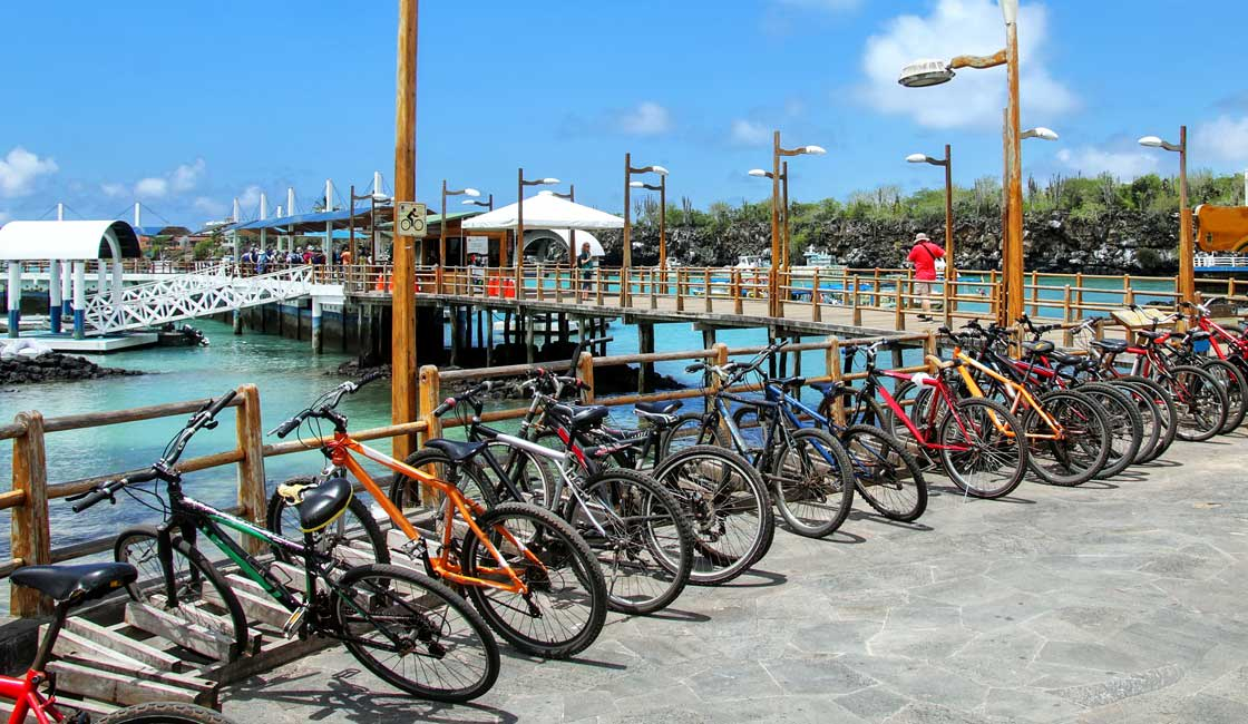 Mountain bikes parked in the port