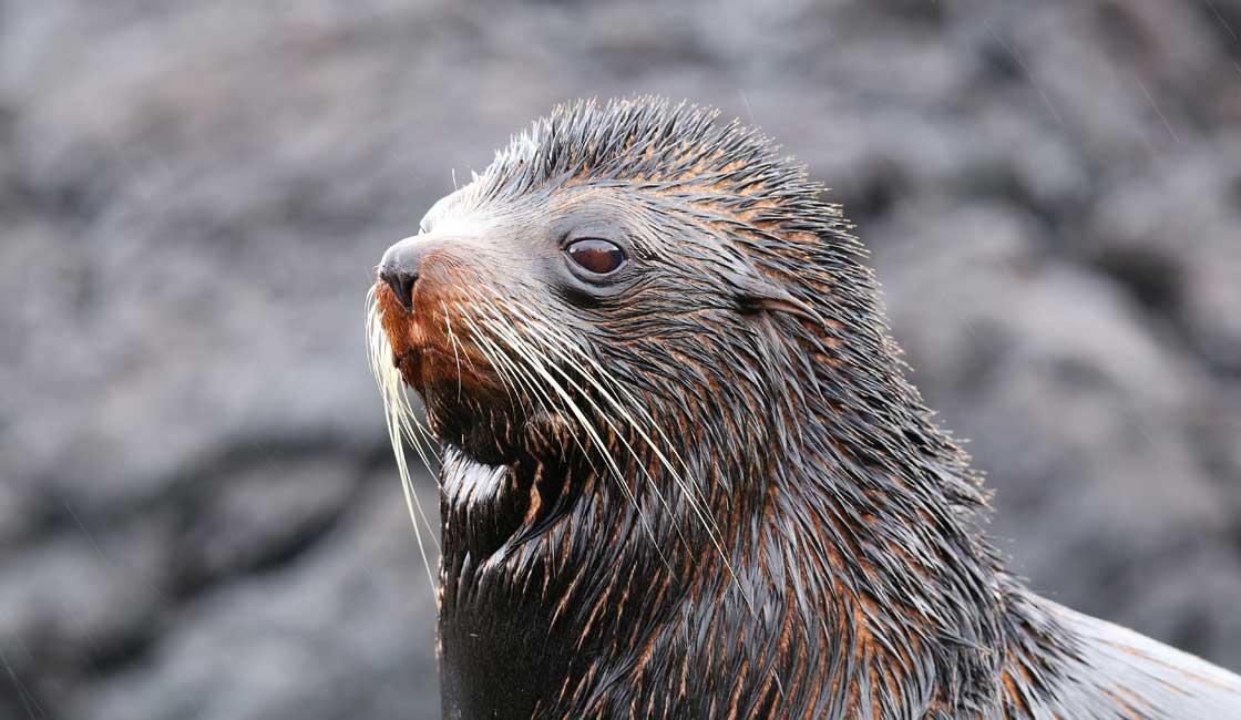 Sea lion in the rain