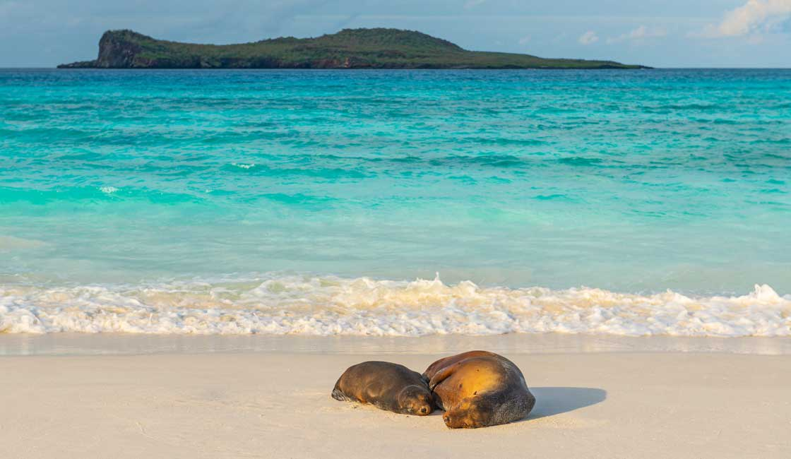 Two sea lions on the beach
