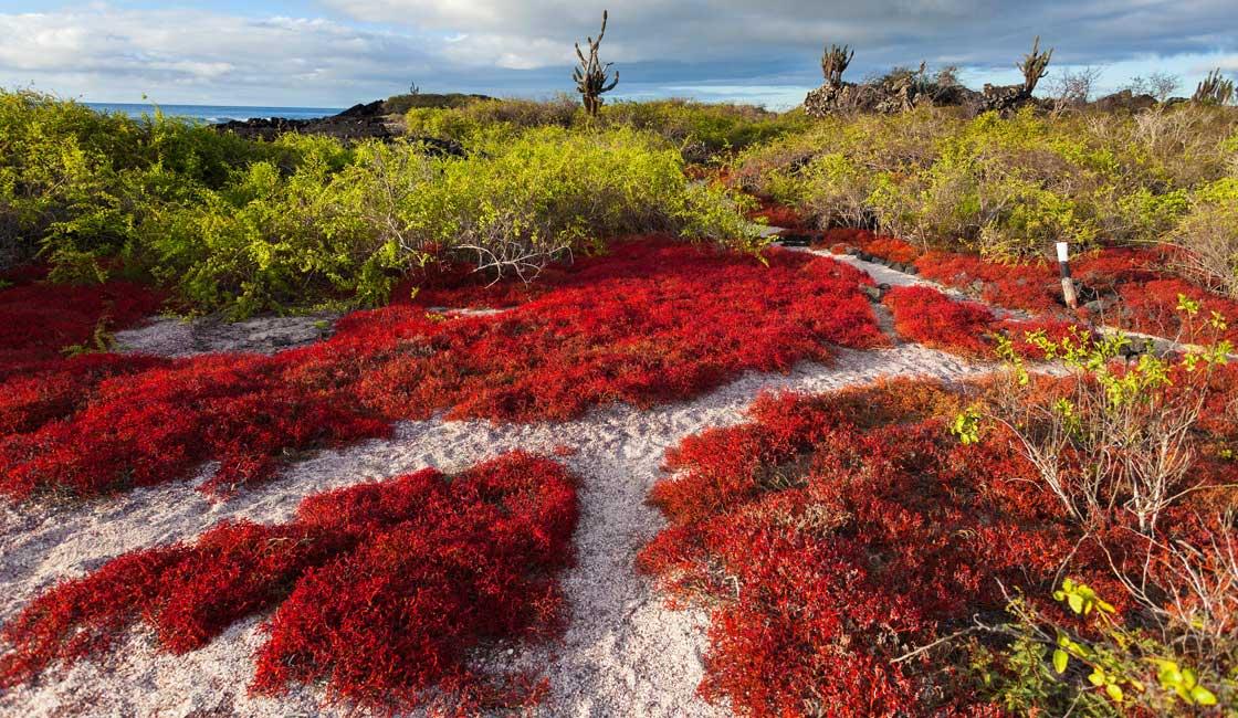 Beautiful path through the island