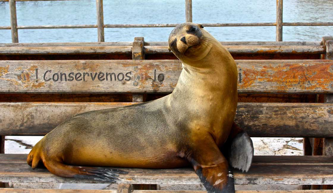 A seal on the bench