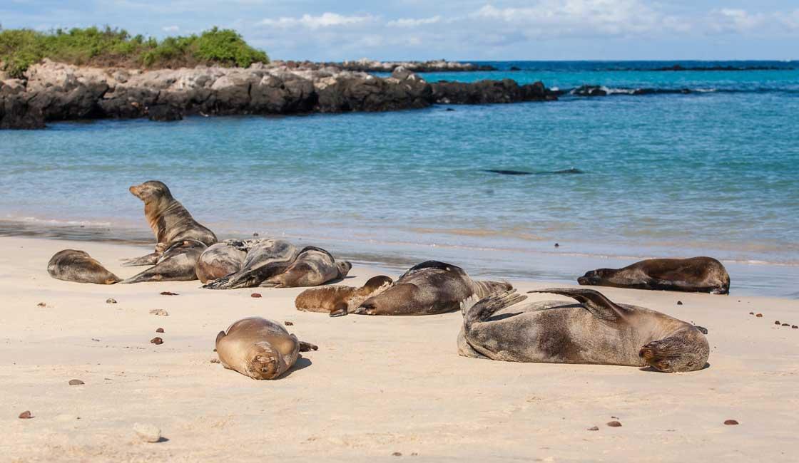 Sea lions on the beach
