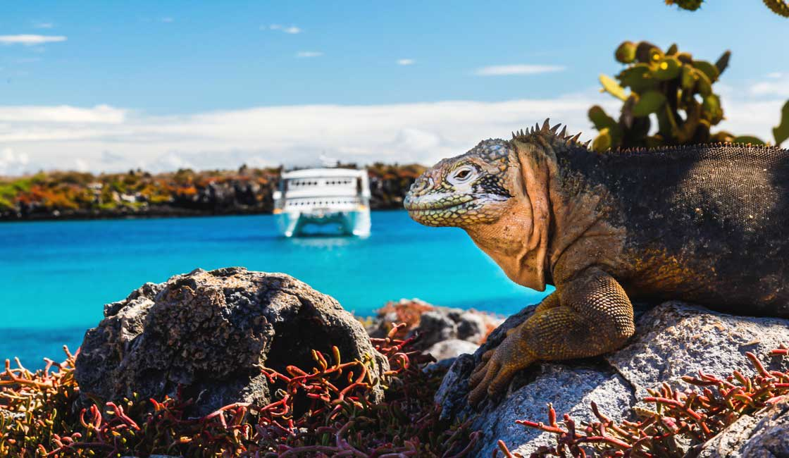 An iguana on a rock and a ship in the background
