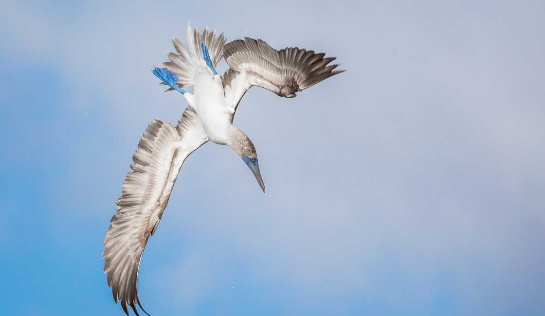 Bird in the air upside down