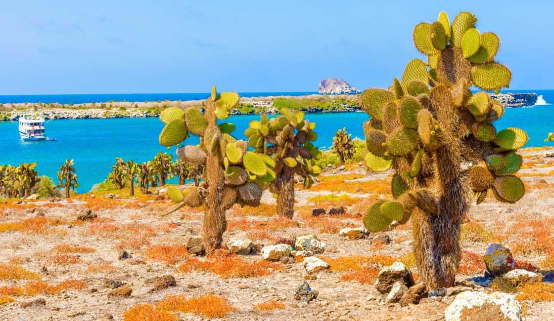 Cactuses on the island