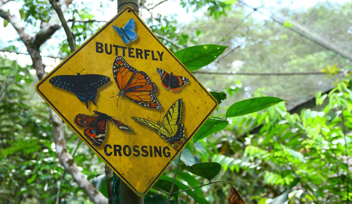 Signs saying Butterfly Crossing