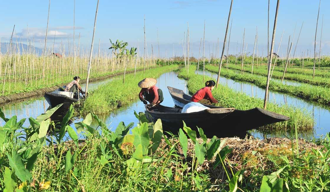 Floating gardens Gardening in sampans