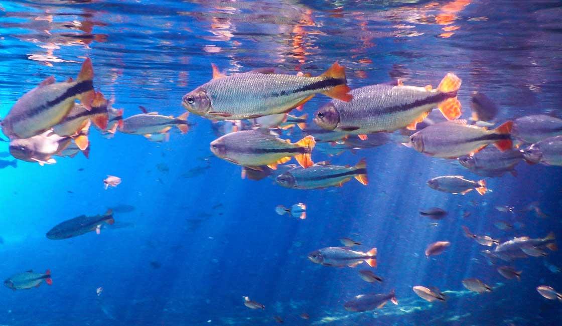 Fish swimming on the aquarium