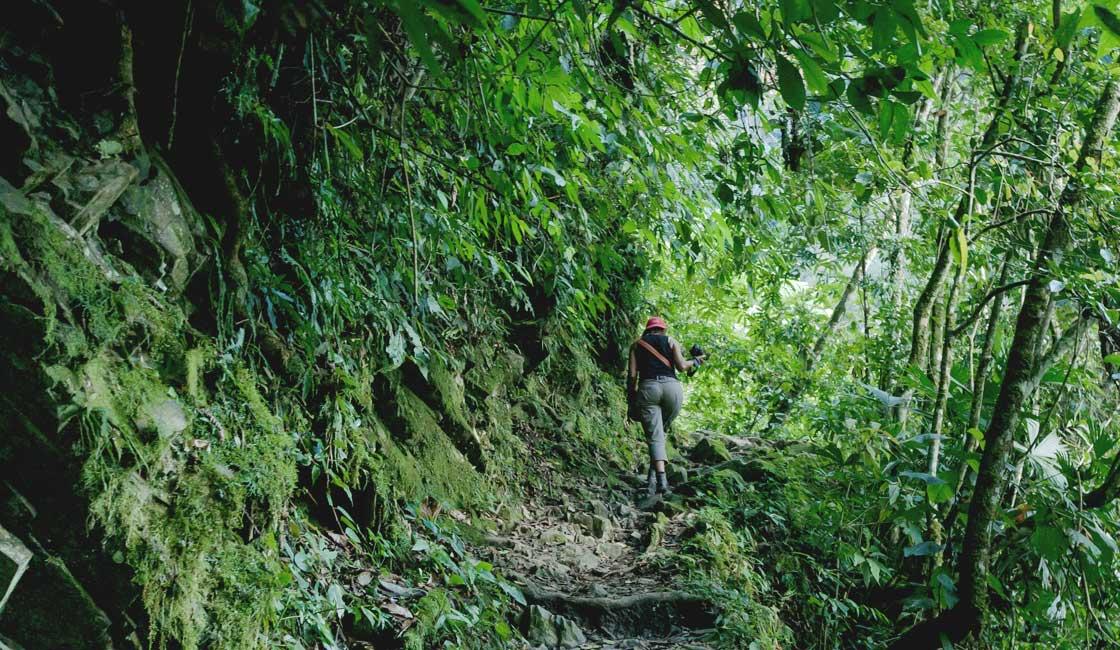 Woman trekking the jungle