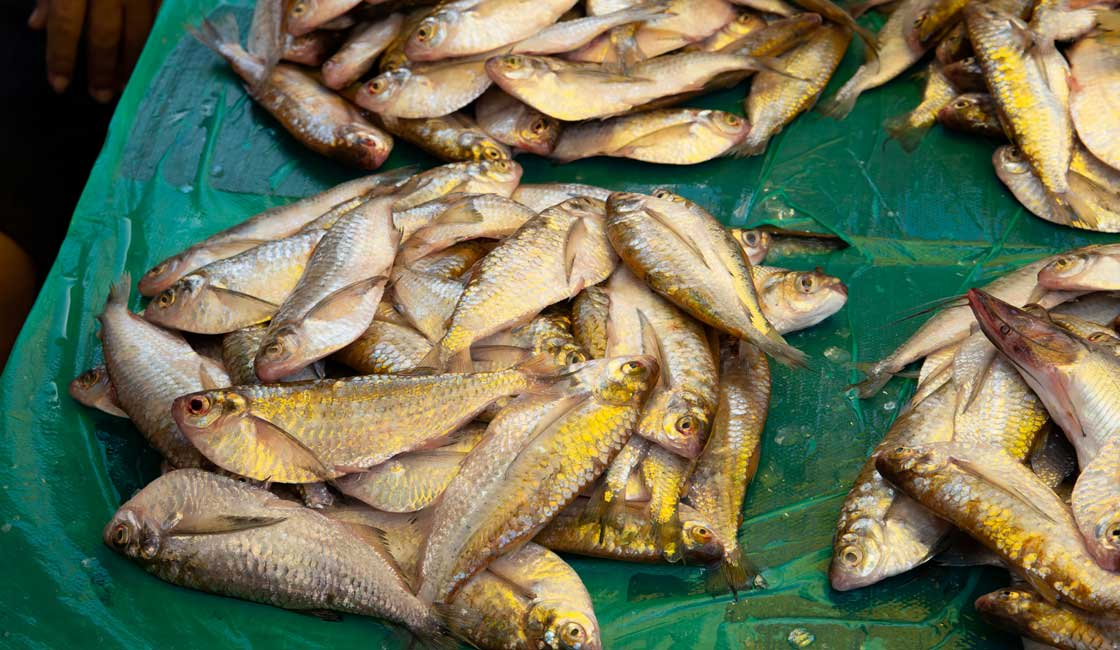 Fried fish sold at the market