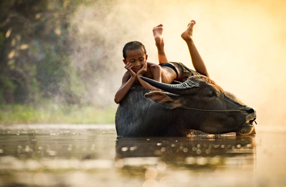 Kid playing with a Buffalo during the hottest time of the year in Cambodia
