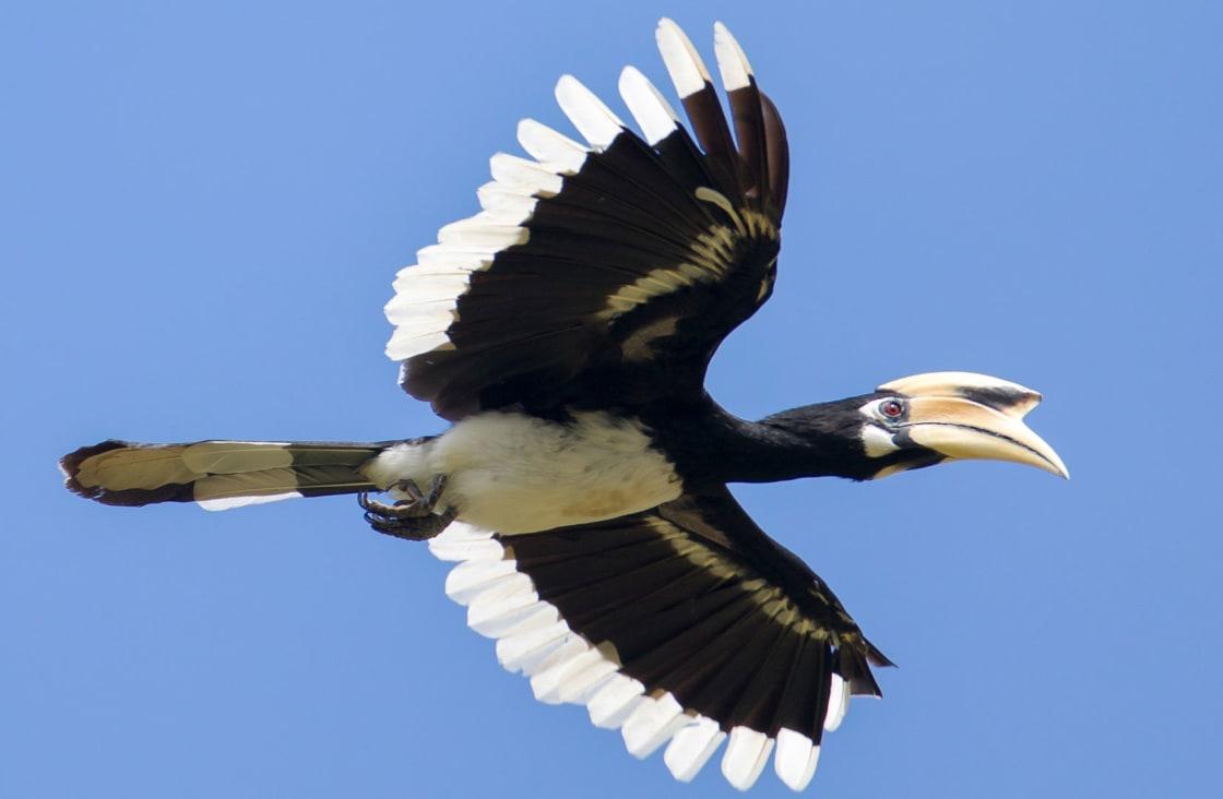 black bird flying july-september