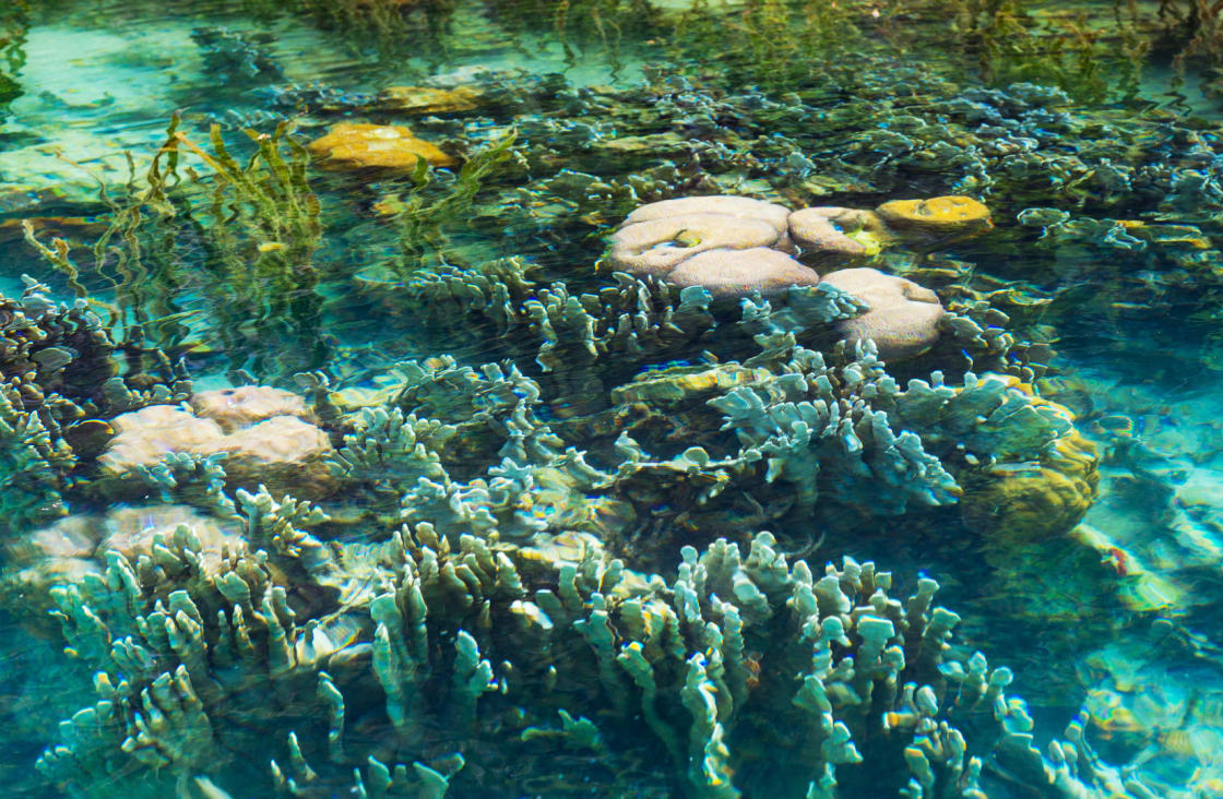 sumba diving