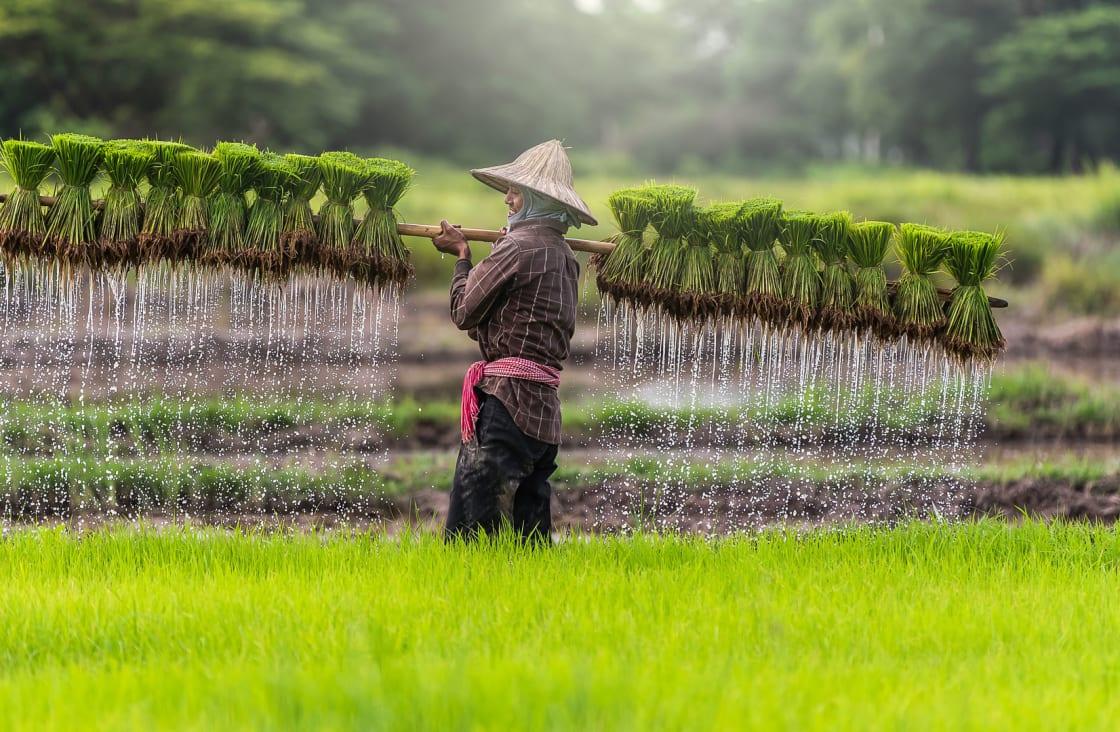 man watering the fields
