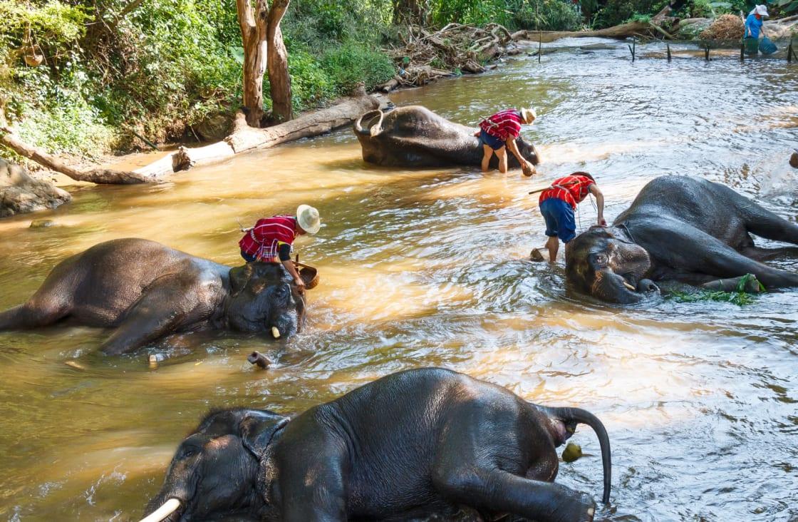 Bathe-With-Elephants