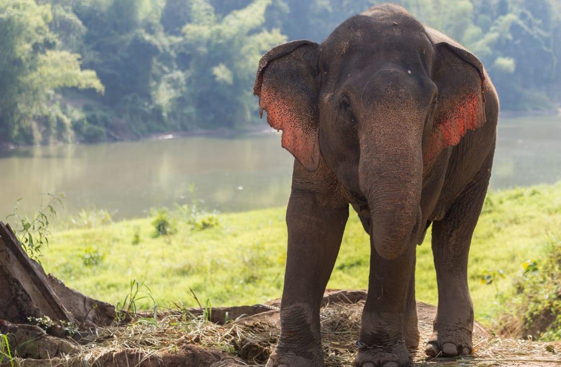 Elephant-Village-Sanctuary