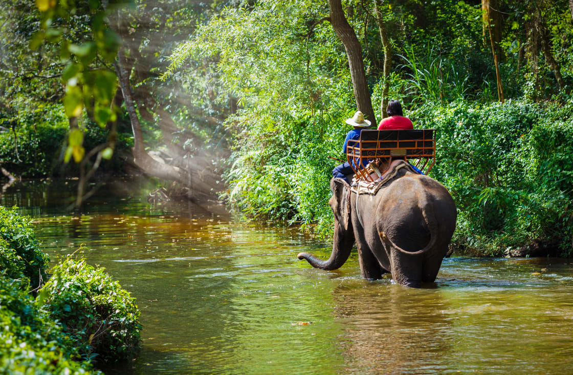 chiang mai elephant in the river