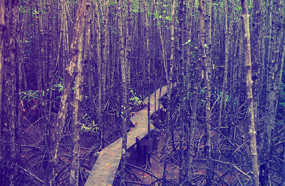 Can,Gio,Mangrove,Forest,,Vietnam.,Can,Gio,Biosphere,Reserve,