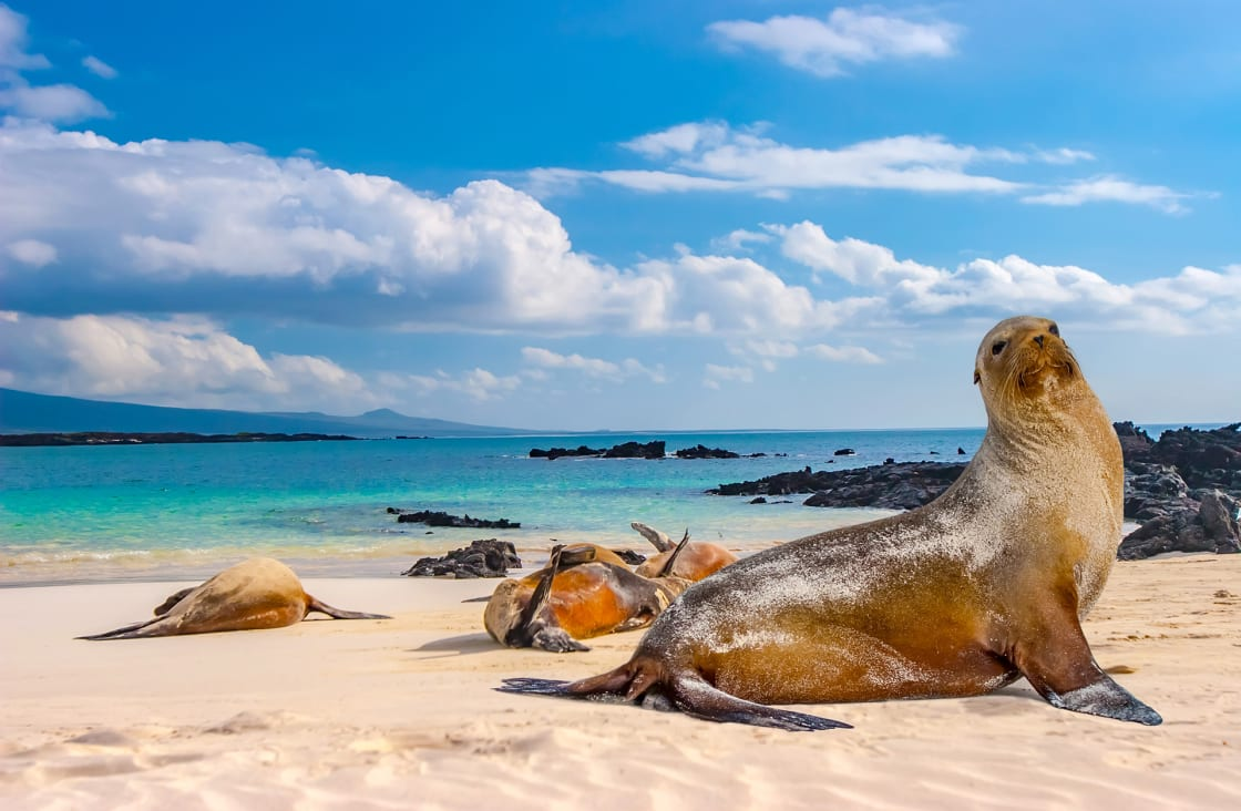 Seals Sleeping On The Beach