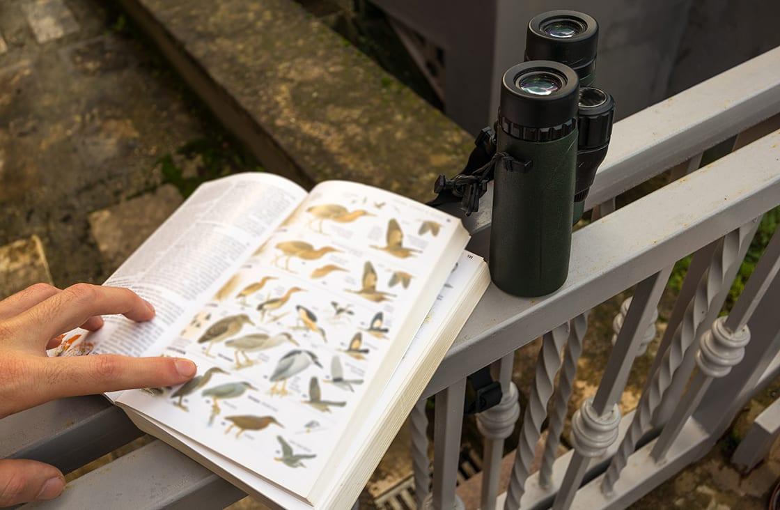Binoculars,And,Bird,Guide,Birdwatching