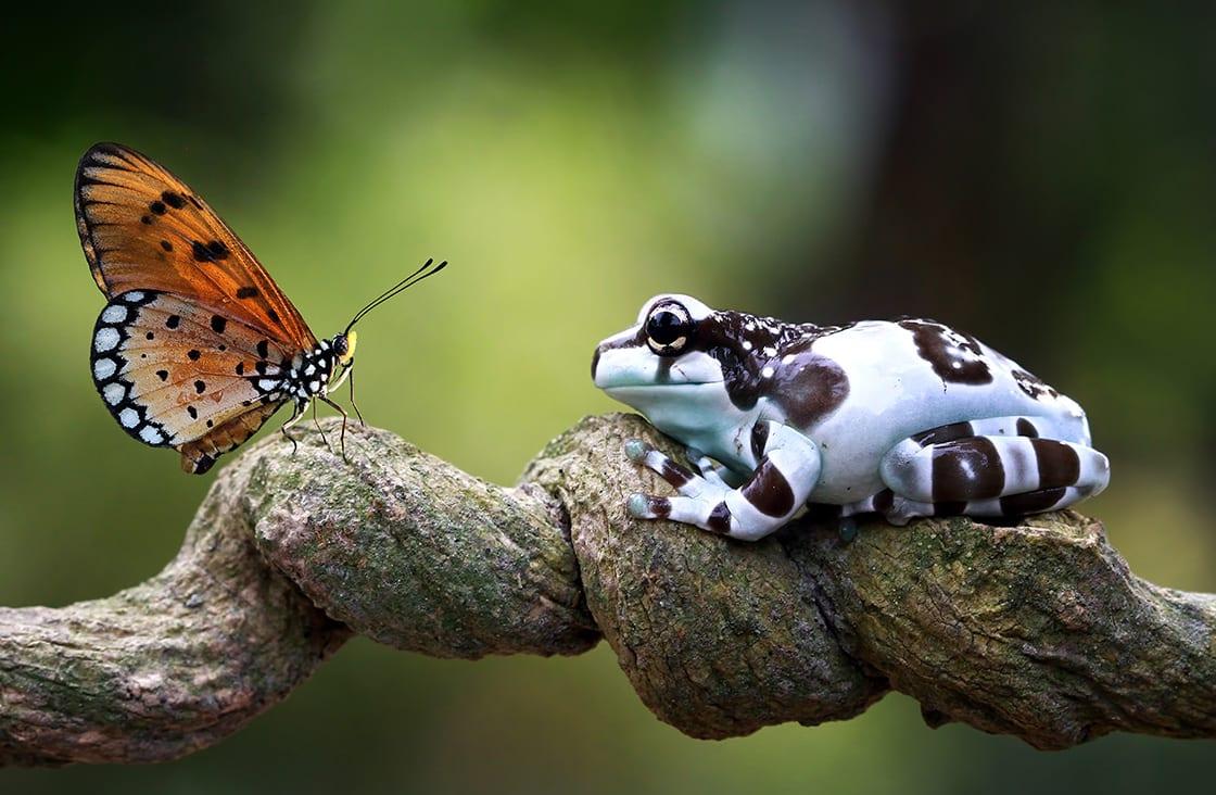 Amazon,Milk,Frog,On,Branch,,Two,Amazon,Milk,Frog,,Panda