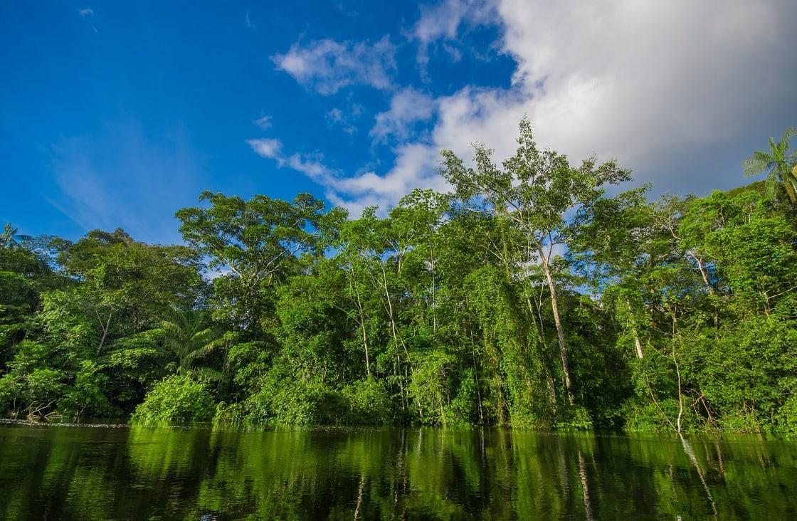 Dense Vegetation On Cuyabeno River