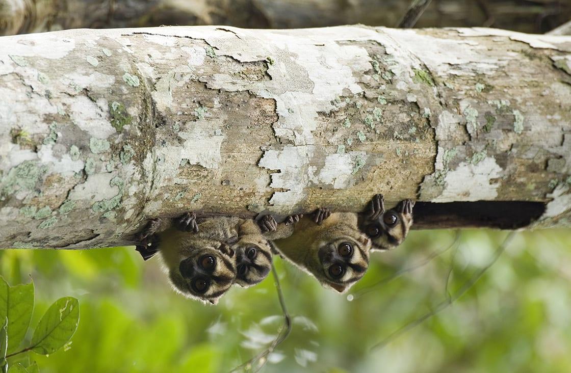 Top-6-Amazon-Rainforest-Monkeys-To-Spot-Main